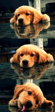 50 Cute Puppies I Adore | Cuded