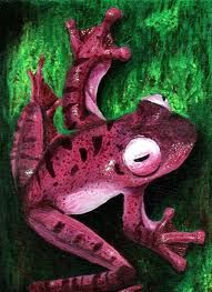 PInk Frog - Awesome!