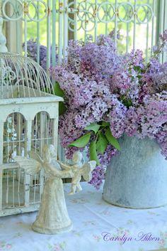 Aiken House & Gardens  Lilacs