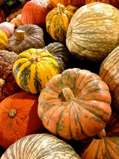 And I'm over the moon for these gorgeous heirloom pumpkins.