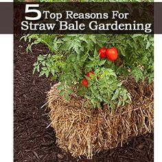5 Top Reasons For Straw Bale Gardening. I have one spot where I think I will give this a try.