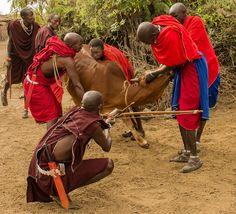 #LesLincke #MassaiBloodLettingRitual