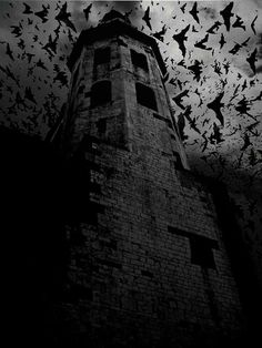 It's always dark inside my mind. (bat, bats, castle, creepy, black and white) Board: Castles Dark Gothic, Gothic Art, Photo Post Mortem, Gif Terror, Halloween Vintage, Halloween Pictures, Scary Halloween, Halloween Treats, Dark Castle