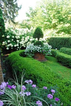 container planting with topiary and underplanting...