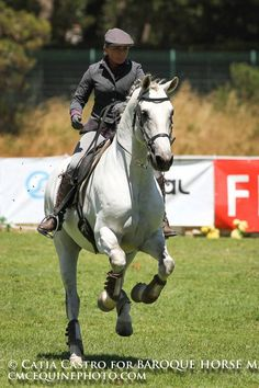 Lusitano - Horse - T Mundo T Commun Rider - Caroline Brun Working Equitation Competition - speed test — with Caroline Poyet Brun in Lisboa, Portugal.