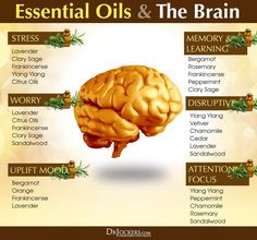 How To Use Essential Oils For Brain Health - http://DrJockers.com