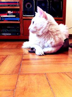 Cirilo <3 sandalha da Lê