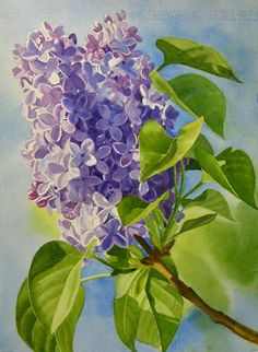 Google Image Result for http://www.pnwwatercolors.com/images/blue-and-lavender-lilac600.jpg