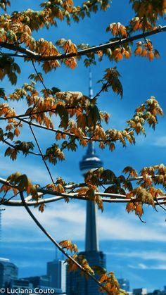 FOTOS DE TORONTO Spring Wallpaper, City Photography, The Province, Toronto Canada, Ontario, Scenery, Photographs, Pictures, Travel