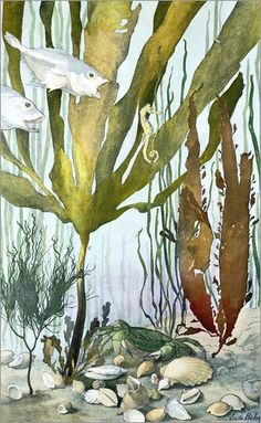 Emile Belet - Seaweed, fishes, sea horse, crab and shellfish, illustrated plates from 'La Vie sous marine', late 1