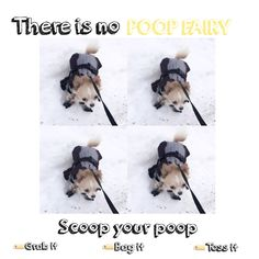 • Scoop your poop! #chihuahua #longhaired #dog