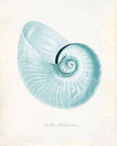 Vintage Sea Shell Print 8x10 P227 by OrangeTail on Etsy, $14.00 Antique Illustration, Illustration Art, Sea Art, Sea Creatures, Coastal Decor, Oeuvre D'art, Vintage Prints, Paper Texture, Sea Shells