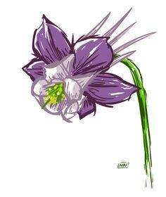 flower | Albino Kraken