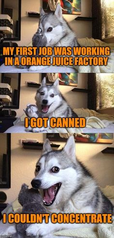 Bad Pun Dog | MY FIRST JOB WAS WORKING IN A ORANGE JUICE FACTORY I GOT CANNED I COULDN'T CONCENTRATE | image tagged in memes,bad pun dog | made w/ Imgflip meme maker