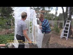 Winter Protecting Your Fruit Trees - YouTube
