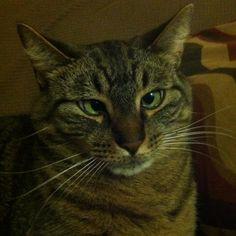 Ebenezer...my cross-eyed cat!