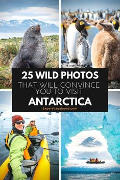 25 Wild Photos That Will Convince You To Visit Antarctica! Visiting Antarctica has been a dream of mine ever since I started traveling, and it finally became a reality. Here are some of my favorite Antarctica pictures from our trip! Travel Pictures, Travel Photos, Animal Experiences, Adventure Travel, Adventure Awaits, Nature Photos, Kayaking, Travel Advise, Travel Plan