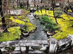 🍃🍃 . . #japon #japan #kyoto #kioto #travelgirl #moss #musgo #grass #bridge #japanesegarden #garden #nature #naturelovers #naturephotography #naturaleza #japanesenature #travel #travelgram #traveling #travelingram #winterinjapan #landscape #landscapephotography #landscape_lovers #japaneselandscape #eikandozenrinji #eikando