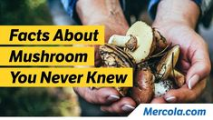 Fascinating Facts About Mushrooms https://www.youtube.com/watch?v=W737dn9rg4s #Healthy #healthyfoods