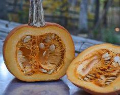 scientific process - exploring a pumpkin Roasted Pumpkin Seeds, Roast Pumpkin, A Pumpkin, Pumpkin Carving, Abc Activities, Autumn Activities, You've Been Booed, Preschool Garden, Pumpkin Lights