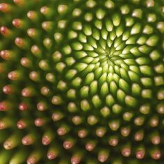 RHS annual photographic competition calls all budding photographers and gardeners. Photo Competition, Any Images, Flower Photos, Fractals, Amazing Photography, Photo Galleries, Nature, Succulents, Leaves