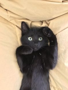 Black cat struck by a sudden thought.