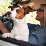 100 Weird Facts About Dogs
