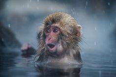 snow monkey by Takeshi Marumoto on 500px