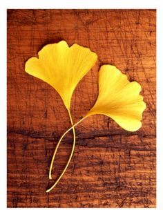 Yellow Ginkgo Leaves Wall Decal at AllPosters.com