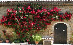 Climbing roses: Entrecasteaux: the olive mill Landscape Design, Garden Design, Love Garden, Climbing Roses, My Secret Garden, Fairy Land, Mediterranean Style, Small Gardens, Red Roses