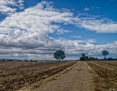 https://flic.kr/p/Kz8RFG   The path between the trees   Views around Twyford Leicestershire