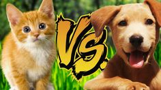 KITTENS VS. PUPPIES | Reading Your Comments #70