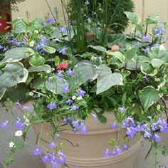 Year Round Container Gardening ideas from a Greenville, SC nursery.