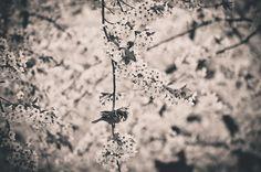 Photo Birds on a blossom wire by Megan Mulder on Dandelion, Wire, Flowers, Plants, Photos, Pictures, Dandelions, Plant, Taraxacum Officinale
