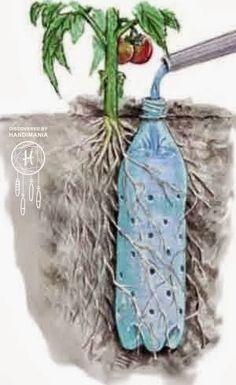 pour les tomates un r servoir d 39 eau avec une bouteille diy id es jardin pinterest. Black Bedroom Furniture Sets. Home Design Ideas