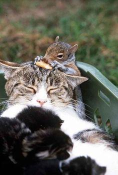 Wat blijven dierenvriendschappen toch prachtig! #1