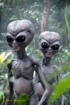 Photo Gallery - Zetan.Net - Life Size Zetans Directly from planet Serpo in the Zeta Reticuli galaxy