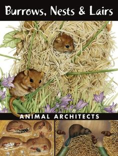 Burrows, Nests and Lairs: Animal Architects