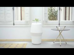 Forget Coffins: This New Urn Turns Your Loved One's Ashes Into a Tree - This New Urn Will Turn Your Loved One's Ashes Into a Tree