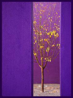 Purple and Gold Purple Love, All Things Purple, Purple Lilac, Shades Of Purple, Aqua Blue, Royal Colors, Colours, Mauve, Purple Reign