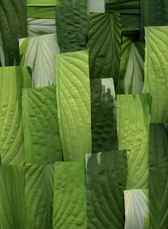 55282.01 Hosta by horticultural art on Flickr... http://calgary.isgreen.ca/category/food-and-drink/smoothies/