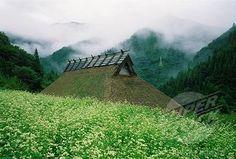 SuperStock - Buckwheat field surrounding thatched hut in mountains, Kawachi, Hiroshima Prefecture, Japan
