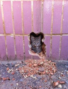 Animals, like humans, as these photos prove, also have days where they just couldn't care less. These funny photos will definitely brighten your day. Really Funny, Funny Cute, Hilarious, Funny Cat Pictures, Funny Images, Tierischer Humor, Satisfying Photos, Chuck Norris, Funny Posts