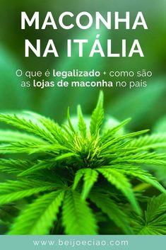 A Itália inteira tem lojas com produtos de maconha. Afinal, a erva é legalizada? Entenda o que diz a regulamentação e que produtos você encontra nessas lojas.