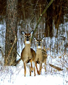 Sportsman's News Photo Contest. Monthly Winners. A Yearly Grand Prize Winner will win a complete Leica Digiscoping Kit (APO Televid Spotting Scope, D-Lux 5 Leica Camera, and Spotting Scope Adapter). Contest Entry: Whitetails