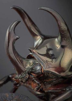 Tête d'insecte.