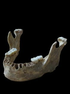 http://www.the-scientist.com/?articles.view/articleNo/43354/title/Neanderthal-Human-Hybrid-Unearthed/  DNA from  40,000-year-old modern human jawbone from cave Pestera cu Oase Romania reveals man had a Neandertal ancestor as recently as four to six generations back