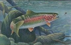 Image result for PAINTINGS OF LAKE TROUT