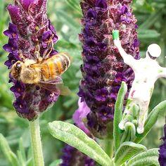 Worker. Bee.