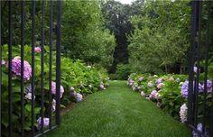 Garden grass walkway idea